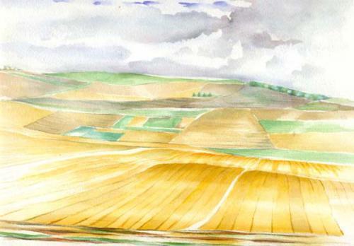 Champs de blé du Berry
