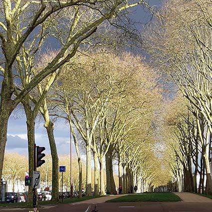 Automne Avenue de Paris