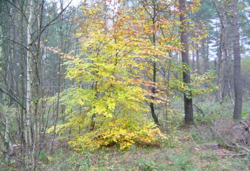 Forêt Ermenonville flamboyant